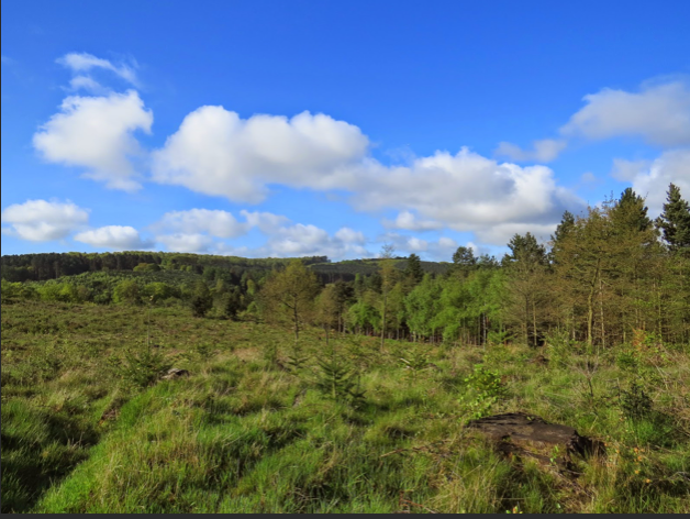 Netwalking - Cannock Chase - POSTPONED
